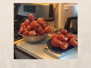 tomatoes-blog-pic